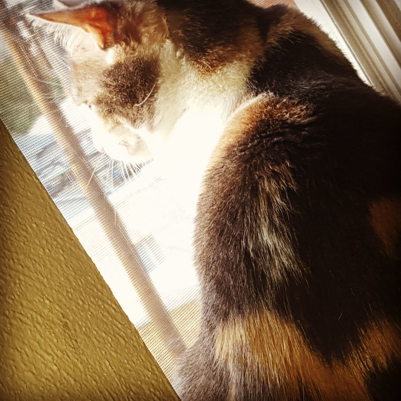 Thoughtful moments Cats 🐱 Thoughtful Relaxing Warm Day