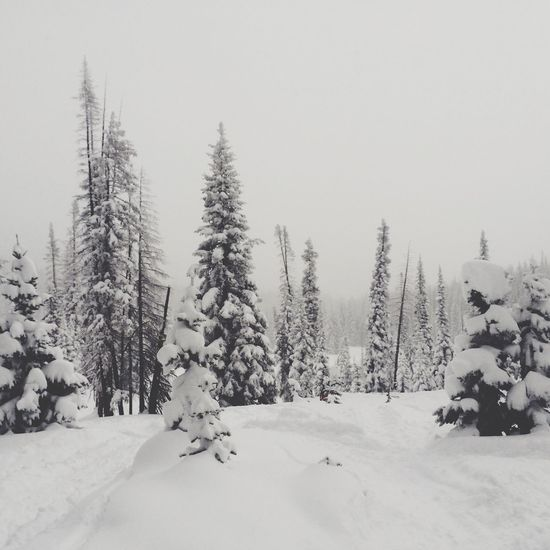 Powder day in steamboat Colorado Snow Winter Skiing