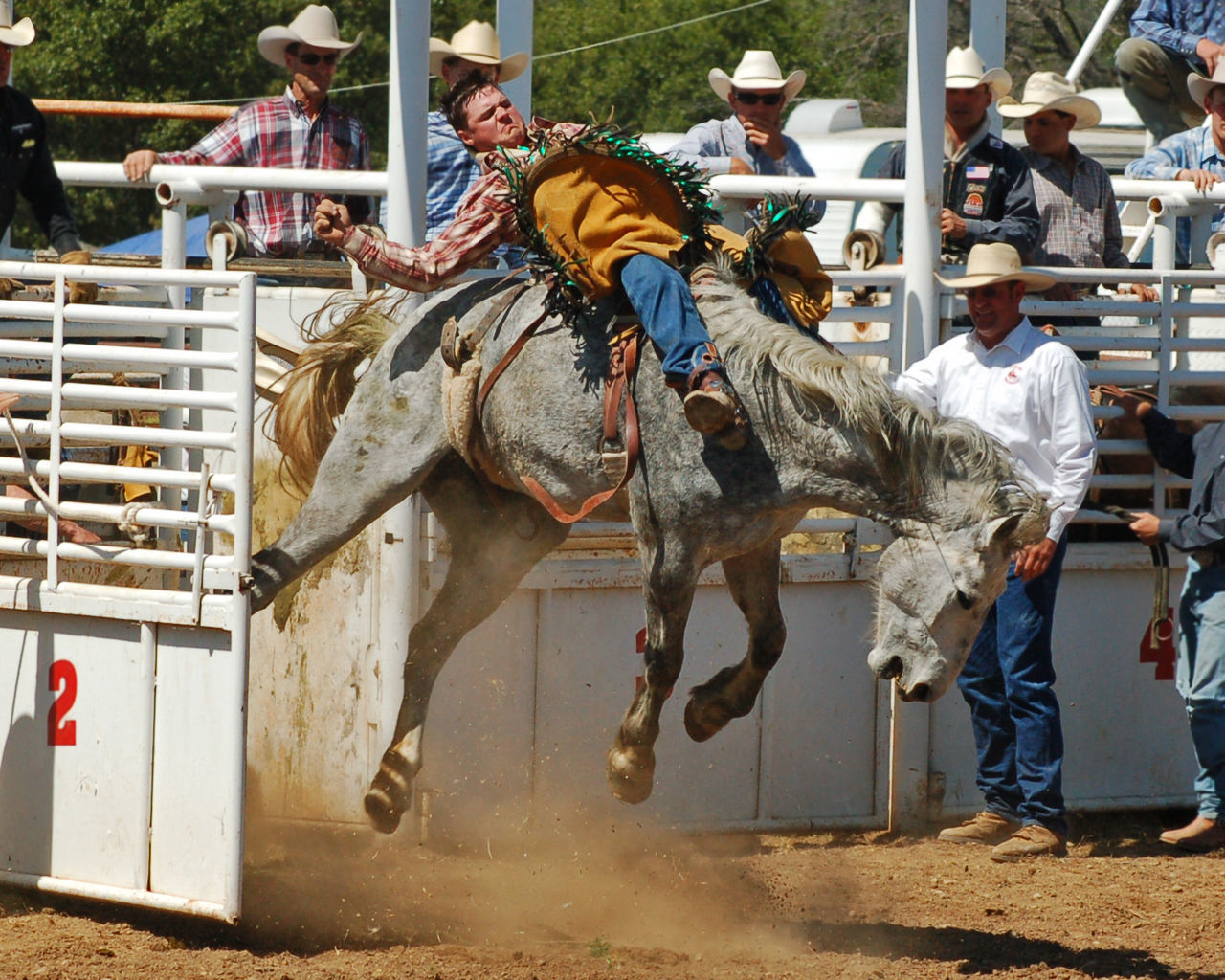 Out of the Chute Adult Bronco Bucking Bronco Chute Cowboy Day Domestic Animals Horse Horseback Riding Livestock Mammal Men Outdoors People Real People Riding