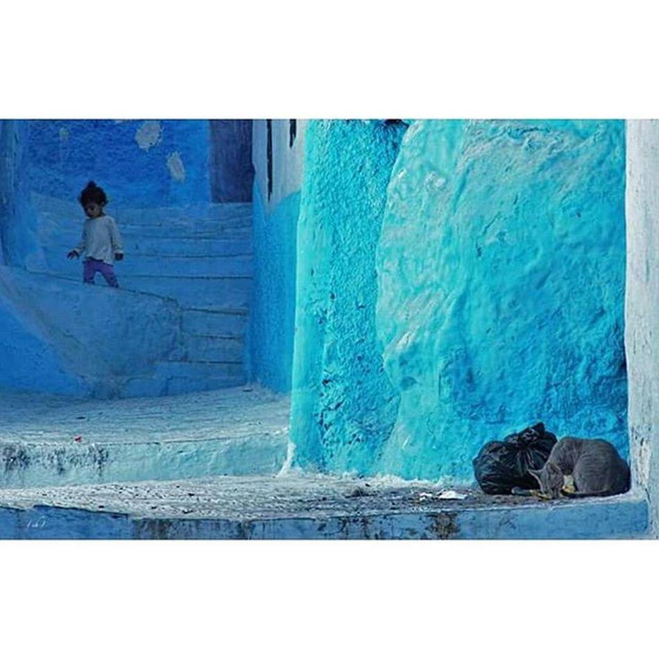 Pausekidcat Pause Kidcat Kid Cat Enfant Chat Child Chefchaouen Street Rue City Architecture Blue Bluecity Villebleue Maroc Morocco Travel Trip Roadtrip Voyage