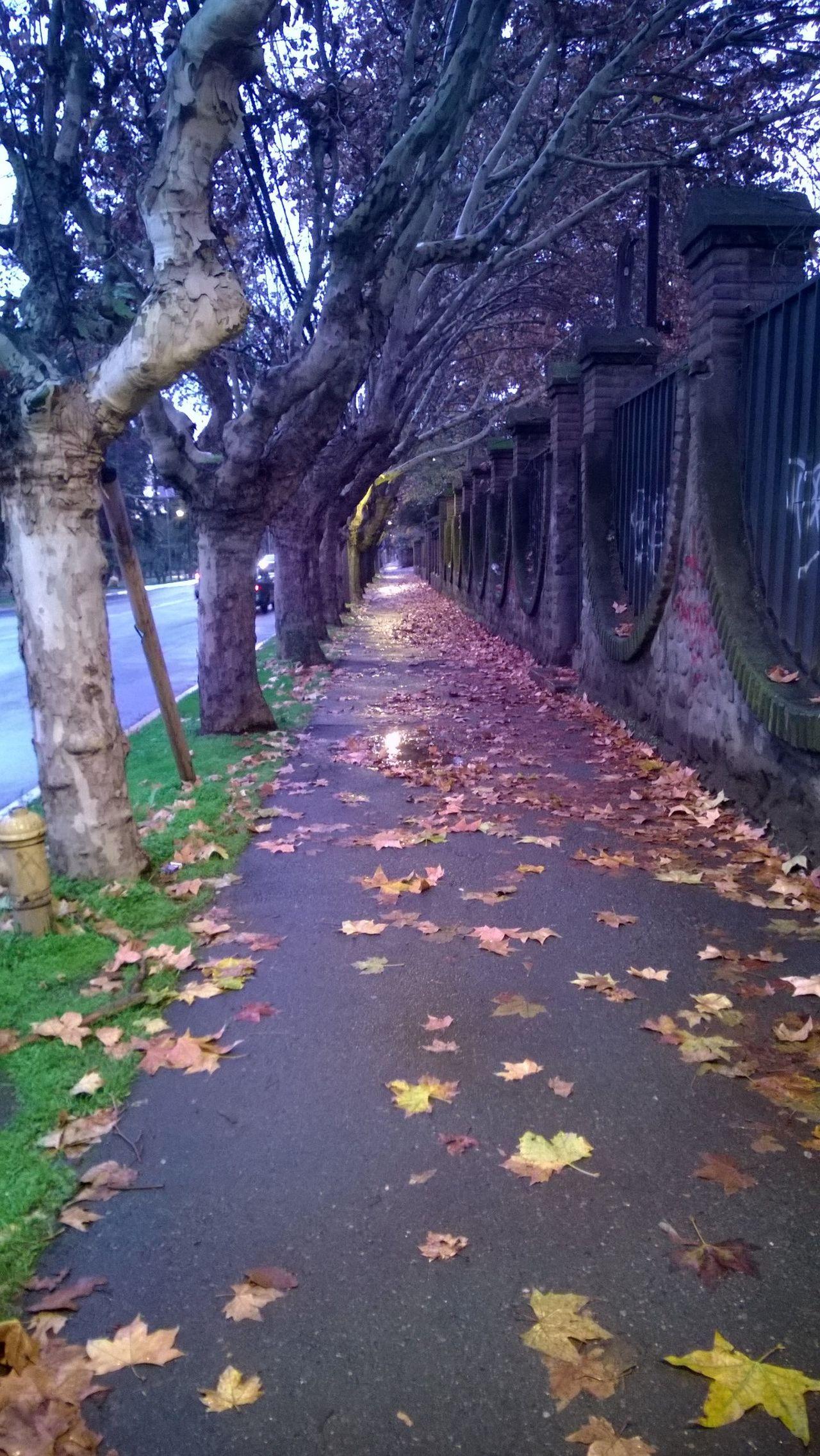 Santiago en otoño