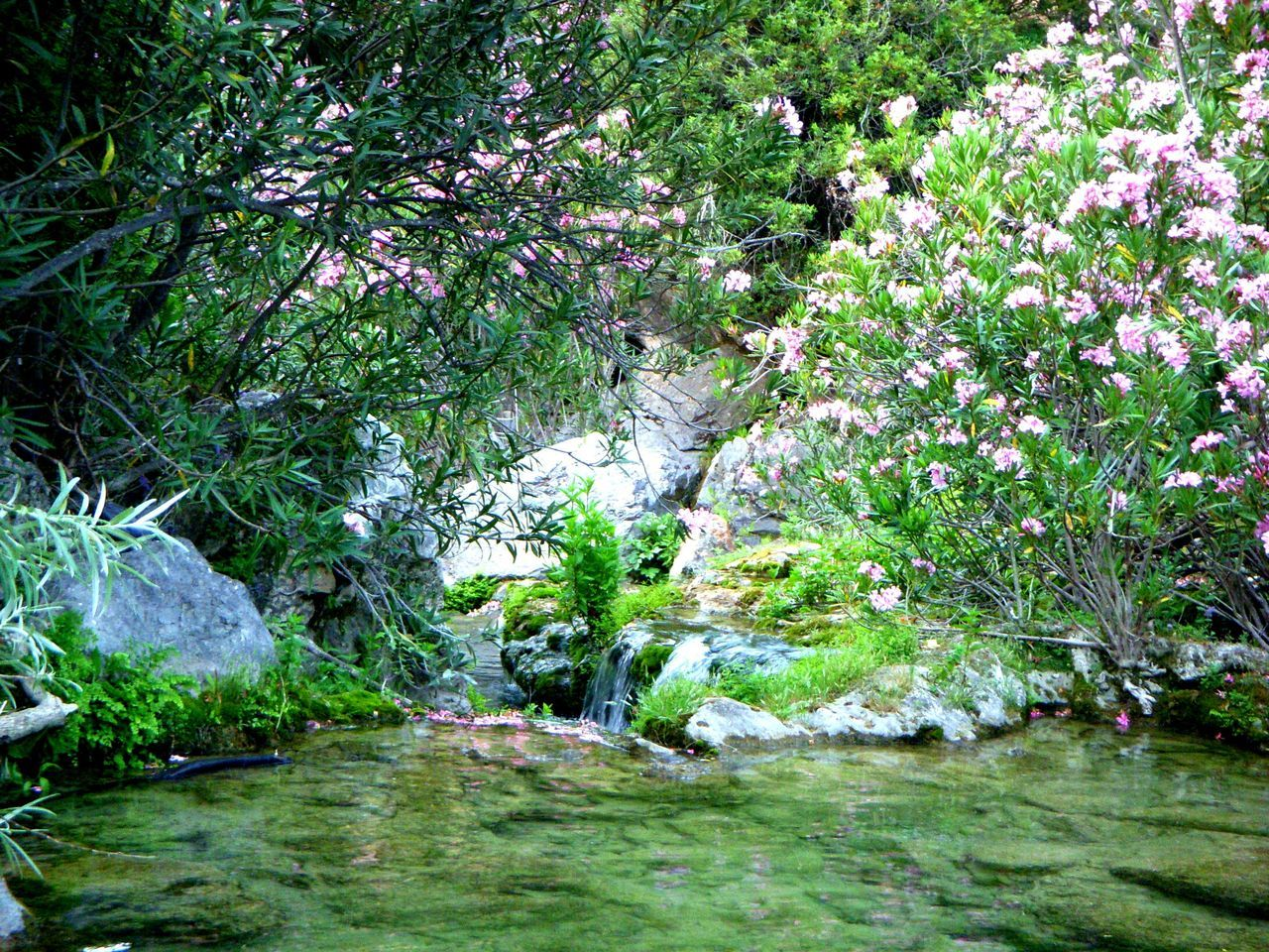 nature, water, growth, tranquility, waterfall, beauty in nature, tree, no people, forest, plant, outdoors, grass, day, flower