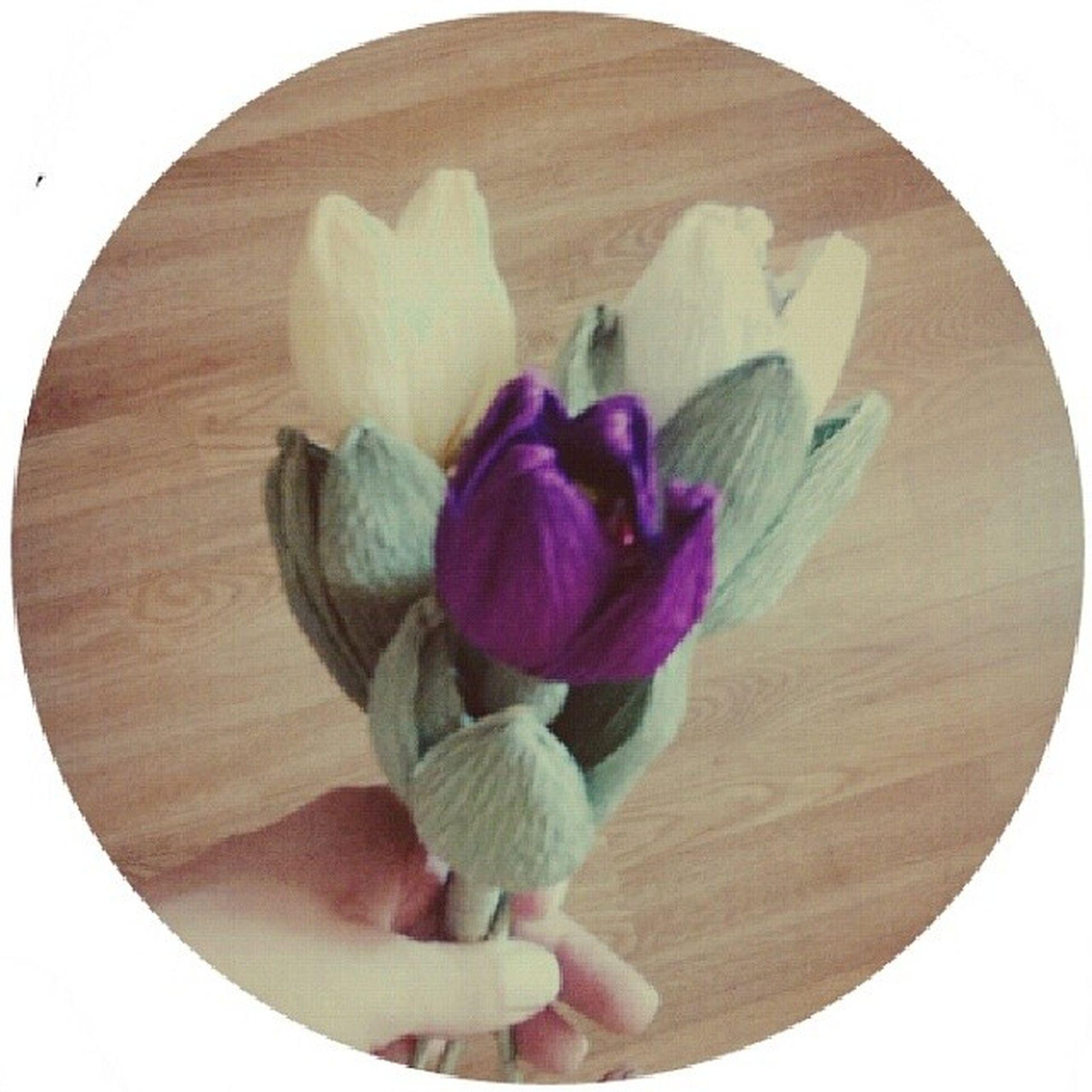 Сладкие  тюльпаны Instaflower Color TBT  tb beautiful instagood