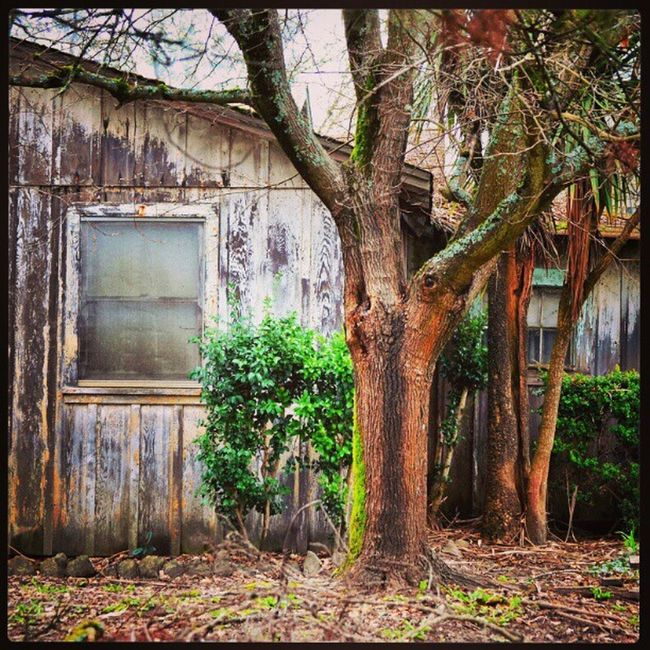 #Graton #California #window #tree #abandoned #house #ruin #decay #mildew #sonoma #sonomacounty #peeling Mildew Graton Sonoma Sonomacounty Abandoned Tree Window House Decay California Ruin Peeling