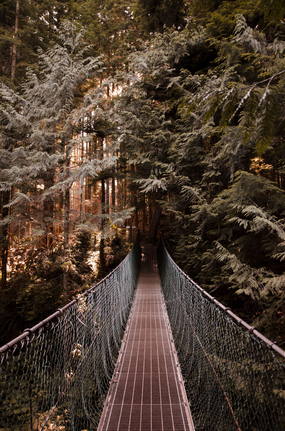 Architecture Bridge - Man Made Structure British Columbia Canada Connection Day Nature No People Outdoors The Way Forward Tree Vancouver Island