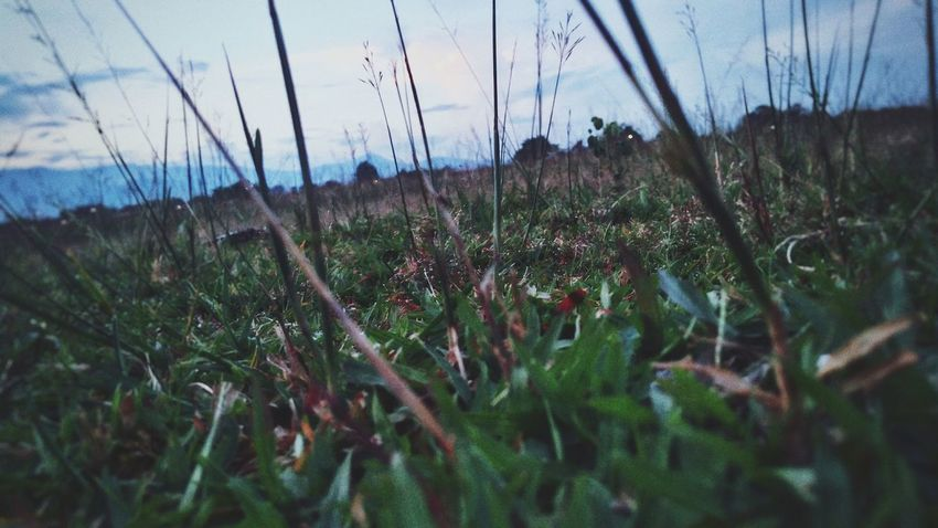 Low Angle View No People Silent Forest Peaceful Moment Windyweather Close-up Shot Outdoors EyeEmNewHere