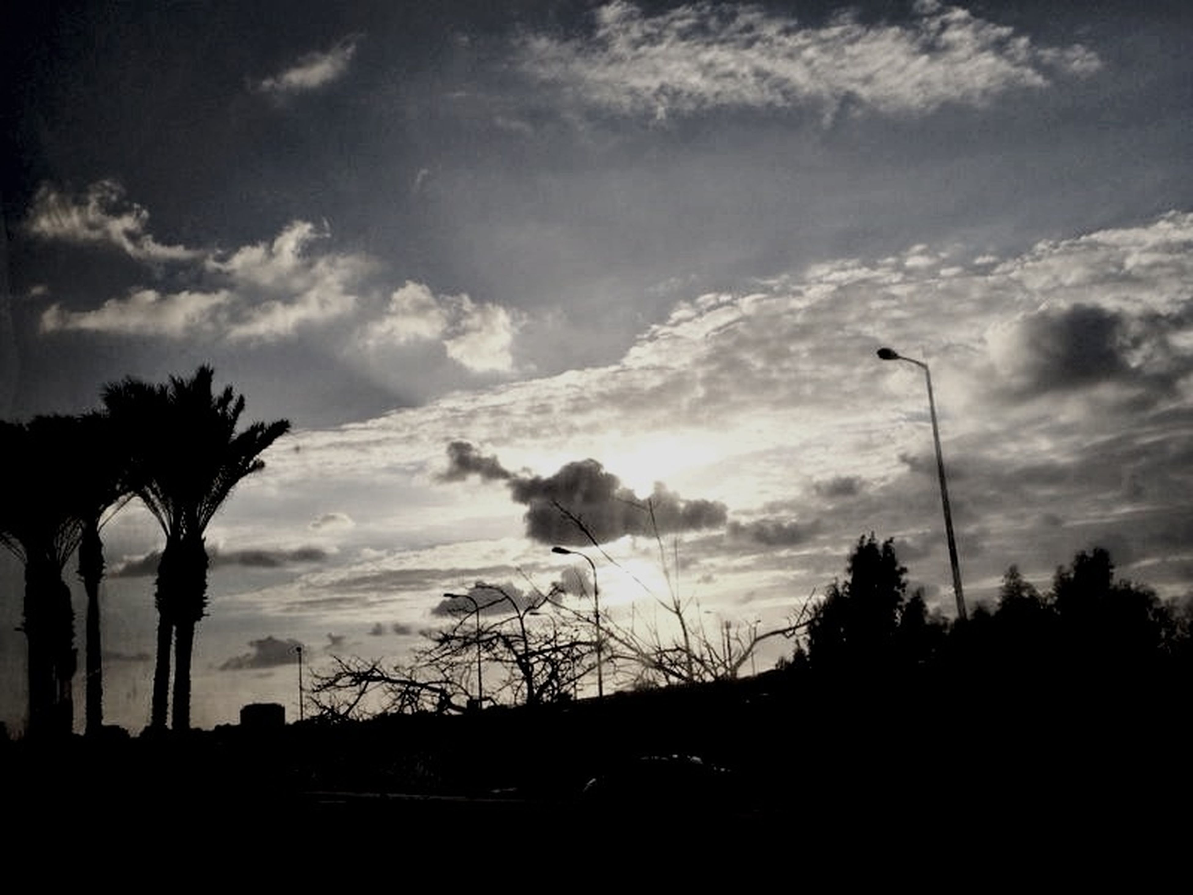 silhouette, sky, tree, cloud - sky, low angle view, cloud, cloudy, street light, tranquility, sunset, nature, beauty in nature, dusk, tranquil scene, scenics, palm tree, outline, outdoors, bare tree, no people