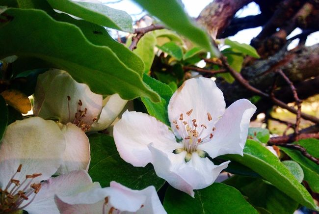 Flowers Nature EyeEm Nature Lover Enjoying Nature Enjoying The View IPhoneography