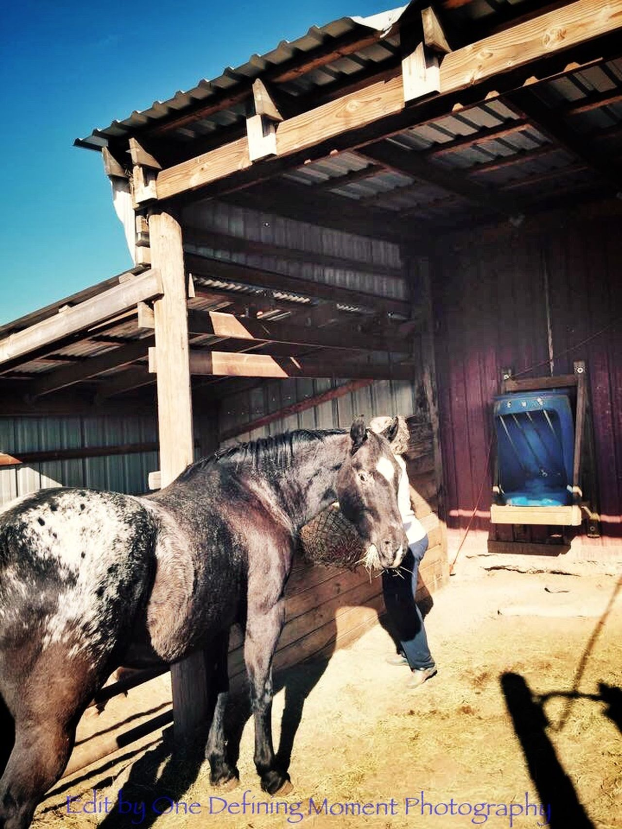 The Places I've Been Today At The Barn Horses EyeEm Animal Lover Horsewoman For The Love Of Horses Feeding  Feeding Animals I Love My Horse Love
