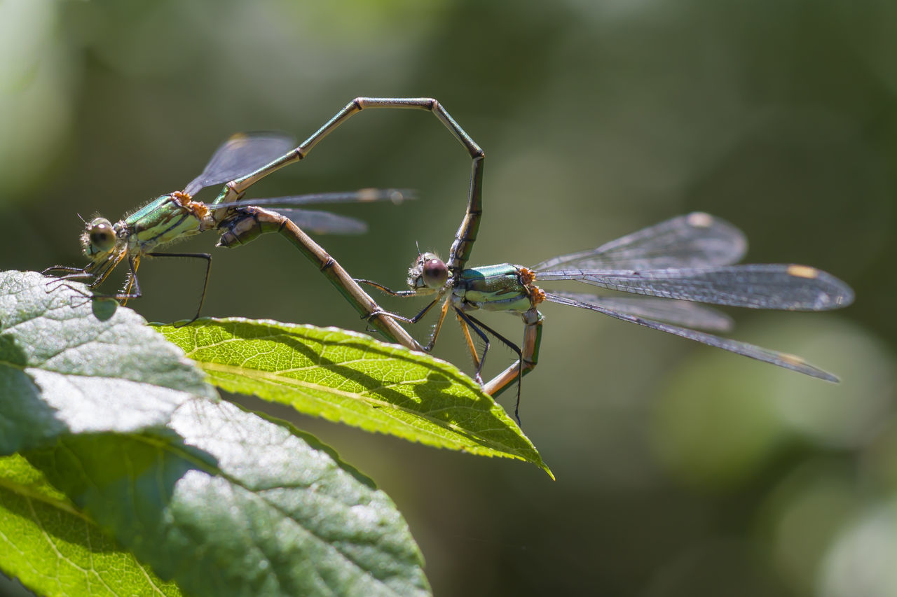 Close-Up Of Damselfly On Plant