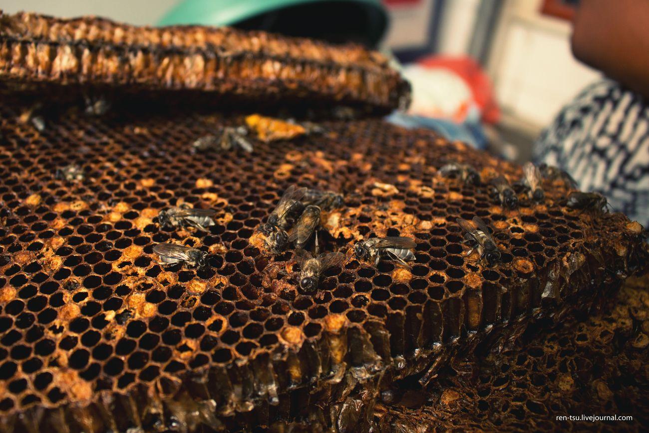 My Best Photo 2015 Kadayawan Bee Honeycomb HoneyBee Davao City, Philippines Davao City 2015  Streetphotography