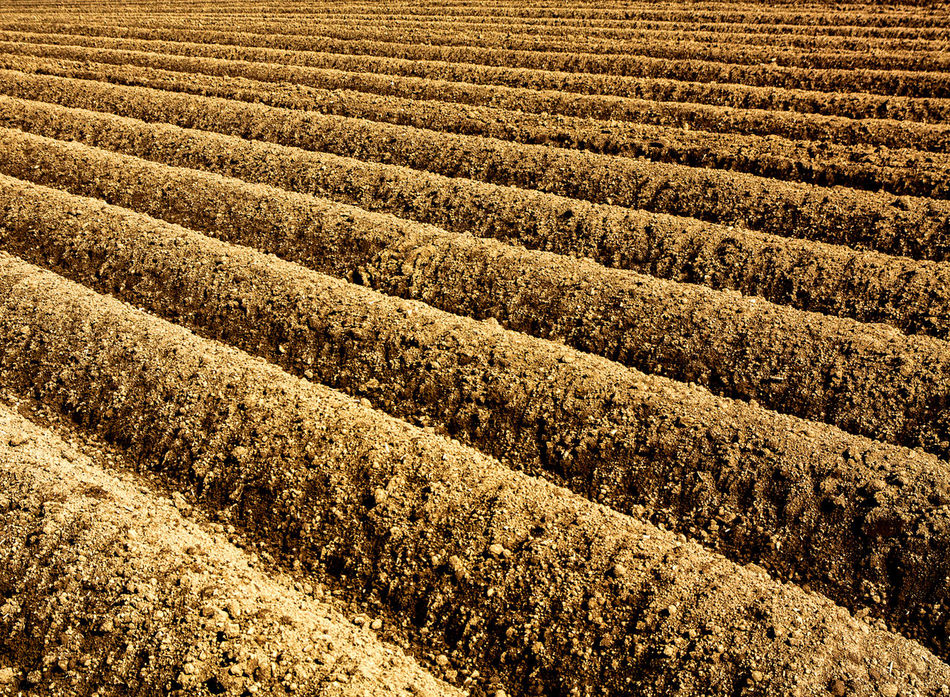 Furrows Agriculture Backgrounds Beauty In Nature Break The Mold Day Field Full Frame Landscape Nature No People Outdoors Pattern Plowed Field Potatoes Field Rural Scene