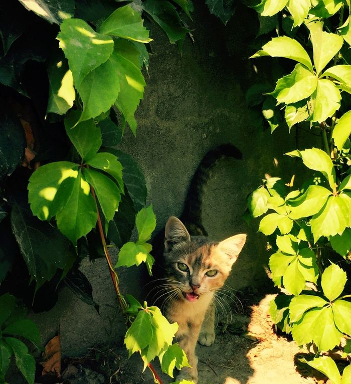 Cat Cats Of EyeEm Cats Kitty Catoftheday Catlover Cat♡ Green Summer Taking Photos