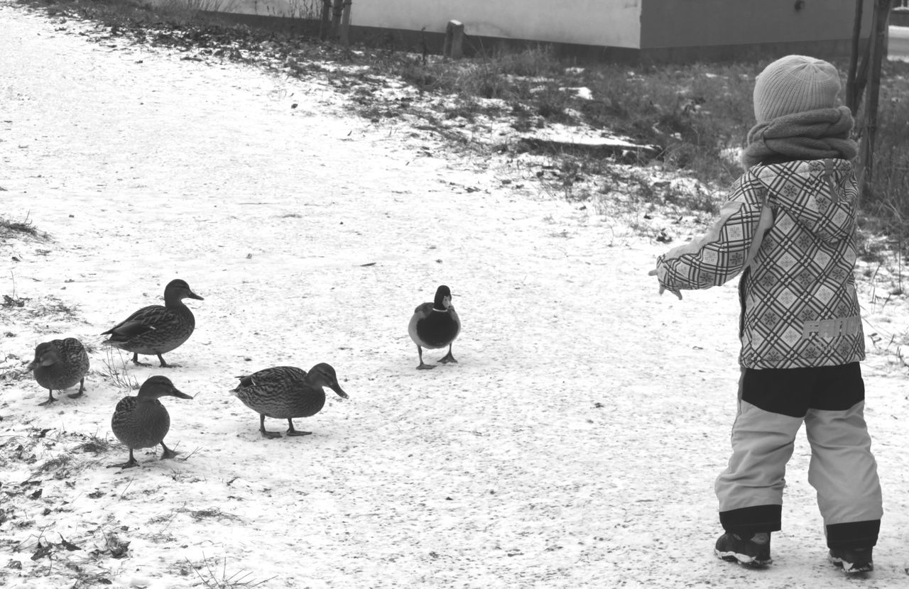 bird, real people, rear view, walking, outdoors, togetherness, livestock, full length, day, animals in the wild, lifestyles, men, domestic animals, nature, warm clothing, mammal
