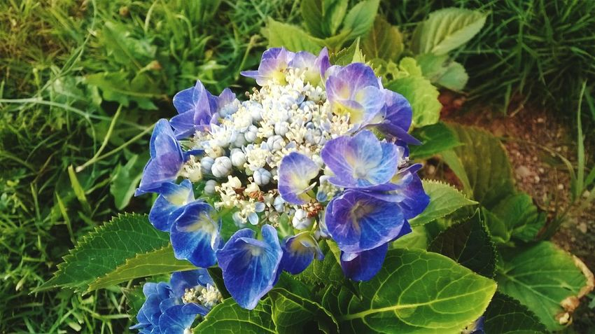 Flower Nature Fragility Plant Summer 🌿☘️🌲🍃 🌱🌹🌸🍁🌷🌺🌼🌻