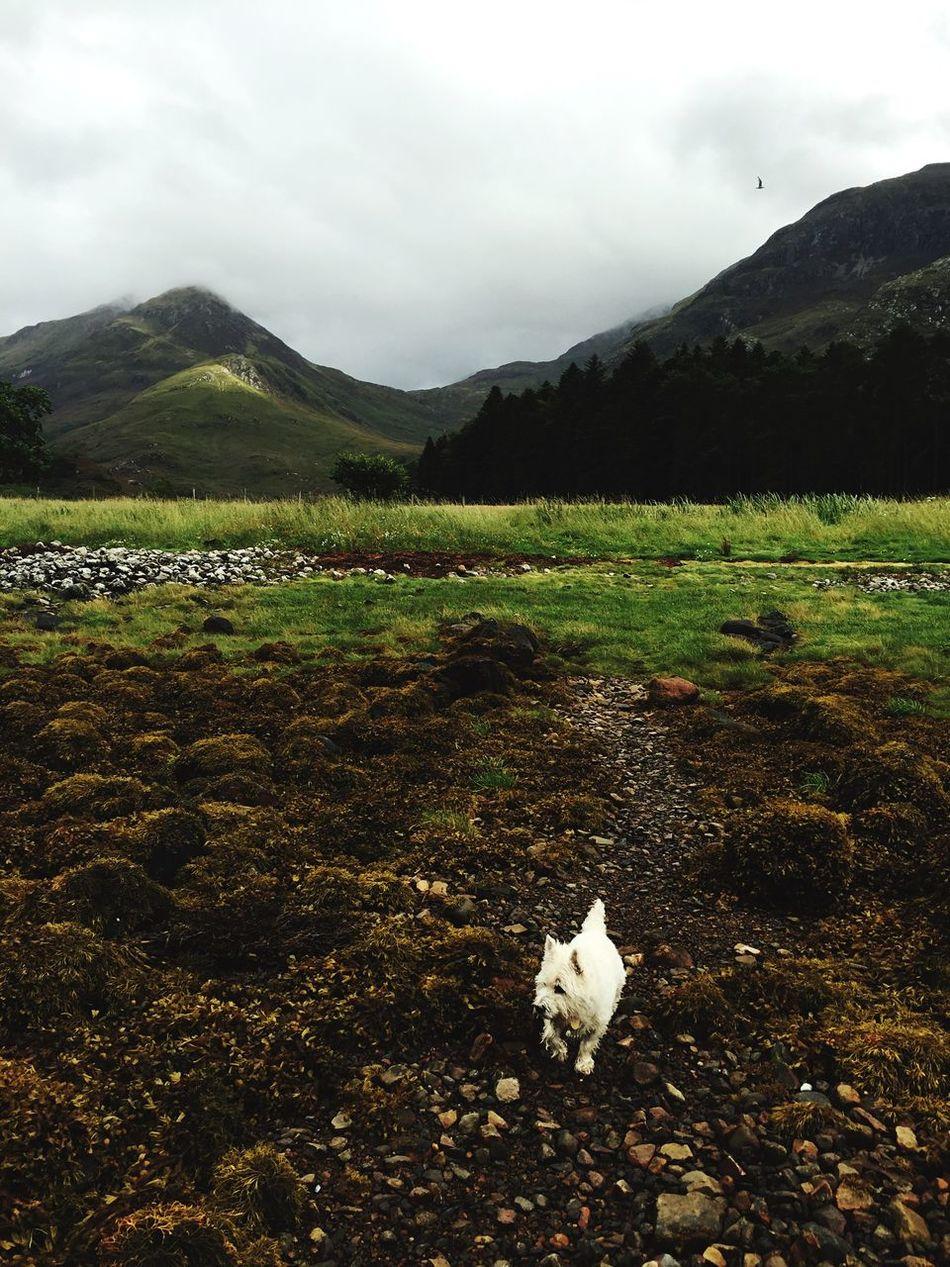 Walking around Loch Leven with our dog Dog Loch Leven Scotland