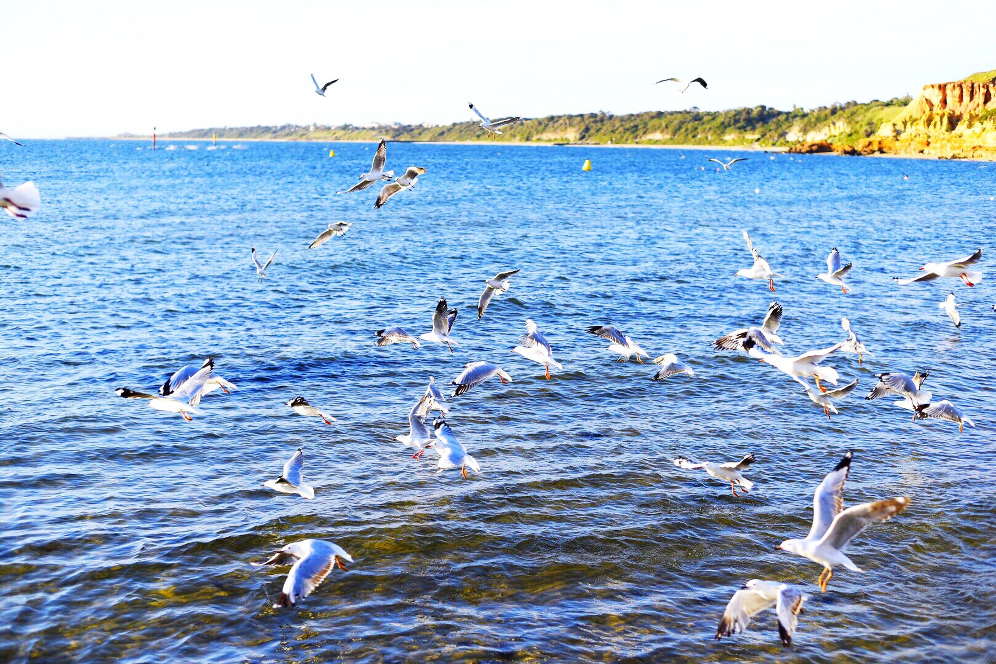 bird, animals in the wild, animal themes, flying, water, wildlife, sea, seagull, flock of birds, spread wings, nature, waterfront, beauty in nature, mid-air, medium group of animals, tranquility, sky, scenics, tranquil scene