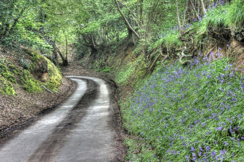 Inviting Road
