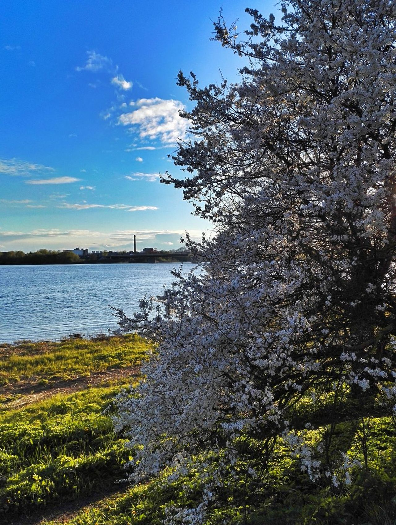 Sky Nature Beauty In Nature Water Scenics Day Sky_collection White Color Springtime Apple Blossom Tree Fragility Clear Sky Beauty In Nature Blue Blossom City River Water_collection