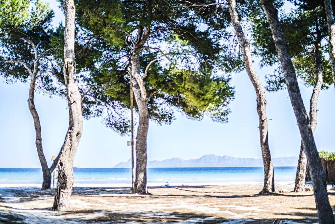 Open Edit Hello World Sea Beautiful Day Sun Holiday Enjoying Life Enjoying The Sun Pinetrees Yay
