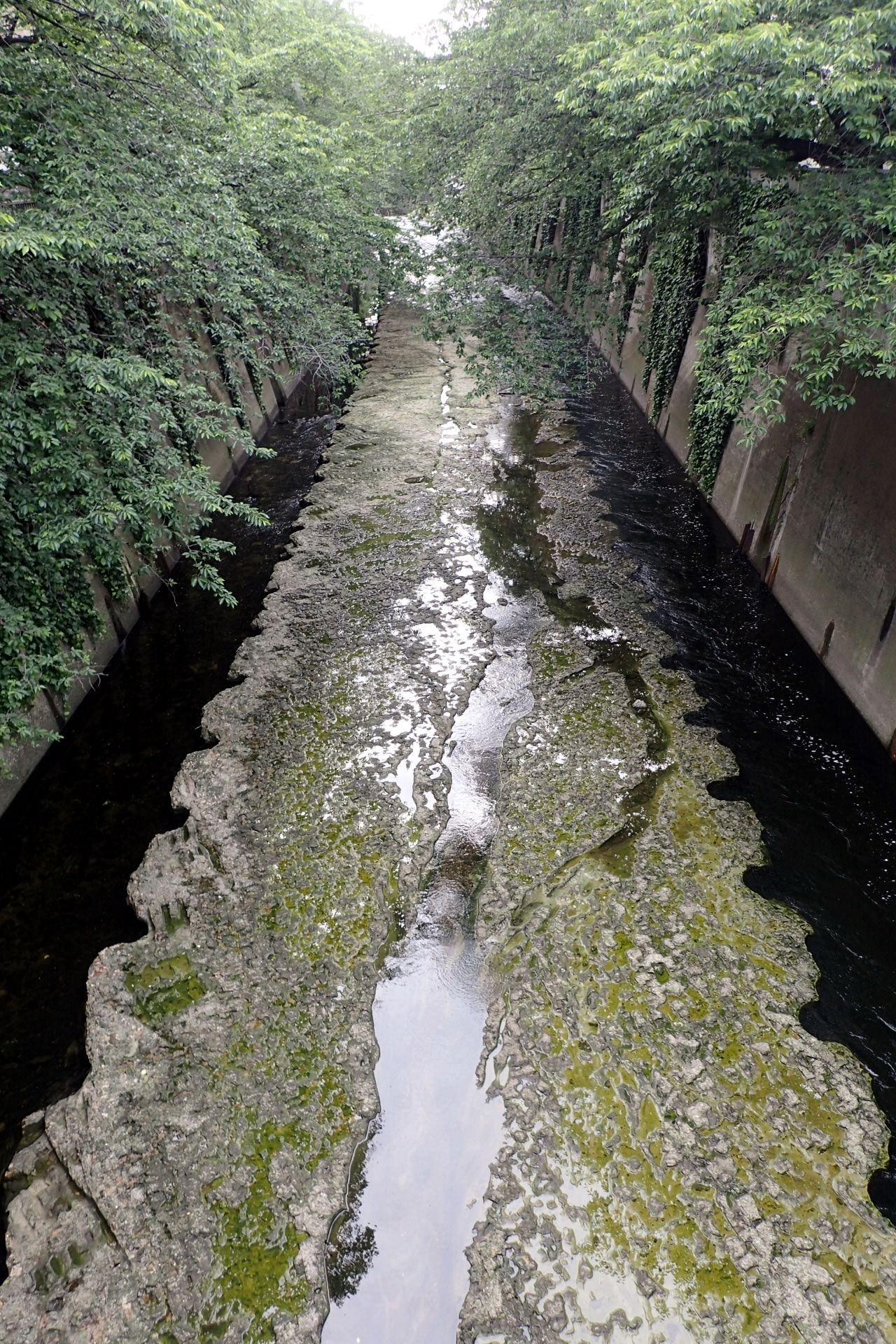 A Bird's Eye View Beauty In Nature Birdseyeview Canal Diminishing Perspective Flowing Water Growth Narrow Nature No People Outdoors Plant River Rock - Object Shinjuku-ku Stagnant Stagnant Water Stream The Way Forward Tranquil Scene Tranquility Vanishing Point Waseda Waseda River Water