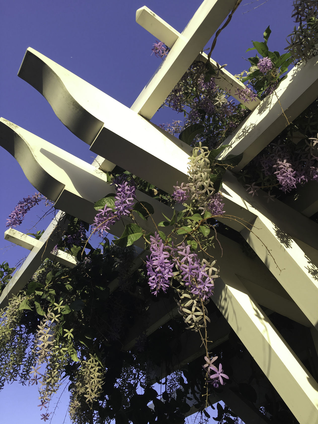 Morning wisteria on trellis Architecture Beauty In Nature Building Exterior Built Structure City Day Flower Fragility Growth Low Angle View Morning Nature No People Outdoors Purple Sky Trellis Wisteria Flower