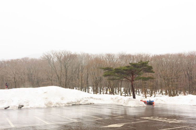 Day Jeju JEJU ISLAND  Jeju Island, Korea Jeju Travel Jeju-do Jeju_korea Jejudo Jejuisland Korea Korea Photos Korean Nature Outdoors Snow Snow Covered Snow Day Snow ❄ Tree Winter Winter Winter Sky Winter Trees Winterscapes Wintertime