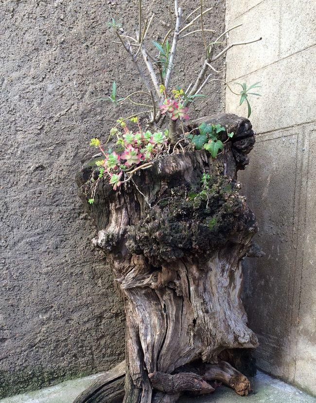Surviving Flowers Flowers IPhone5 Flowers,Plants & Garden Nature Photography Nature