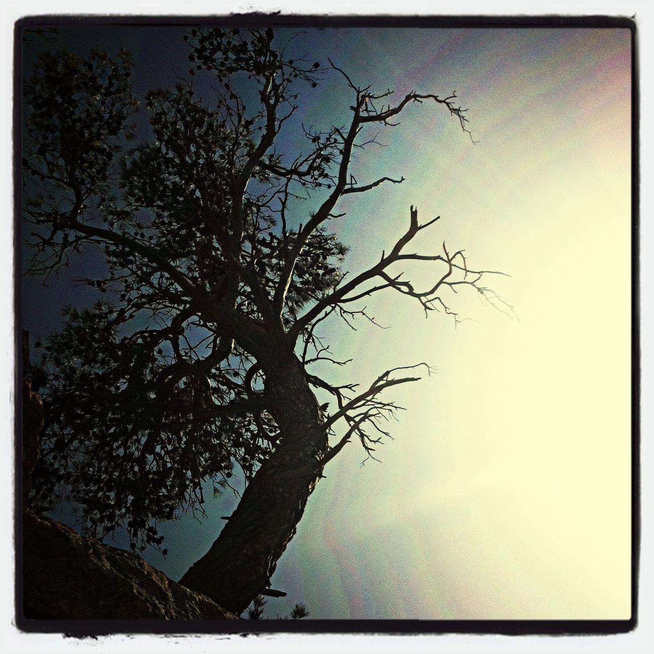 Tree Shadow Enjoying The Sun Serra De Tramuntana