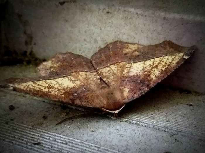 Moth Close-up Insects  Spread Your Wings No People Dusty Door Jam The Unfortunate