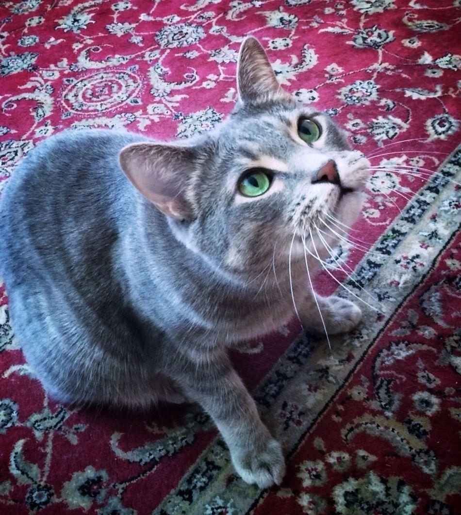 WHAAAT? We missed A birthday?!? Happy Un-Birthday to you, @canalyuyu !! We hope it was a good one???☺️ Tadaa Community Mel&BomBi Tadaa Kitties Cat