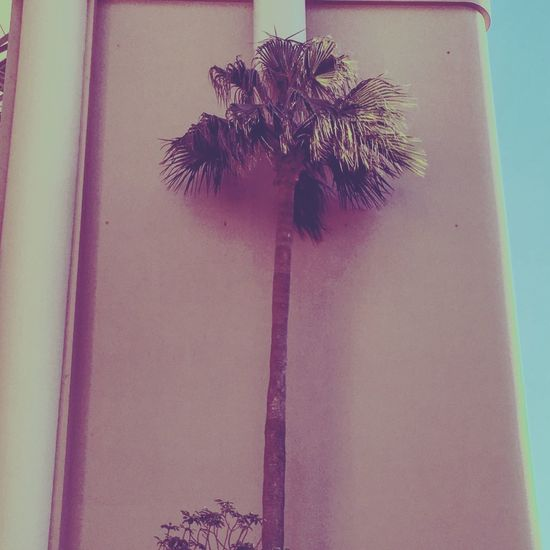 Low Angle View No People Built Structure Palm Tree Architecture Day Nature Japan Yokohama Miami Miami Beach 80s Colorful