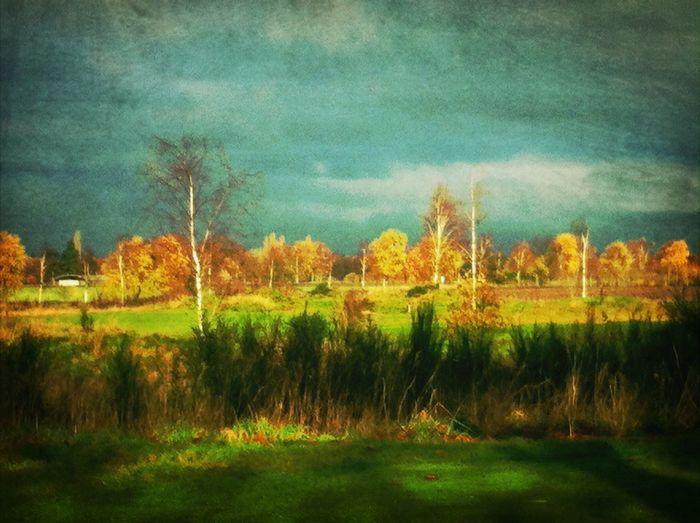 Zondagmorgen net na een miezerbui. Renkum Landscape Nature Clouds