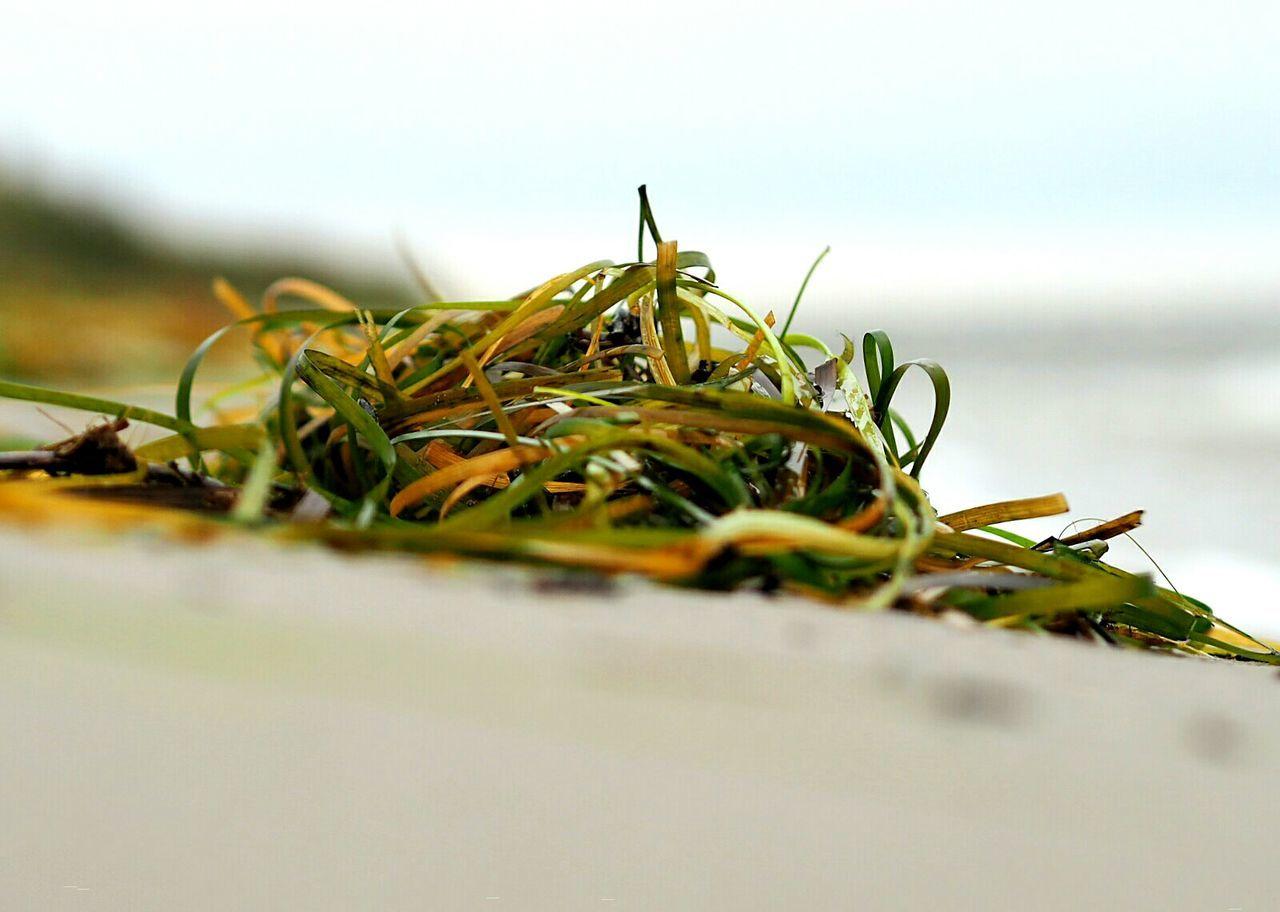 Frieden ... Beach Beachphotography Life Is A Beach Open Edit Olympus Olympus OM-D E-M5 Mk.II Nature Eye4photography  Shootermag Green