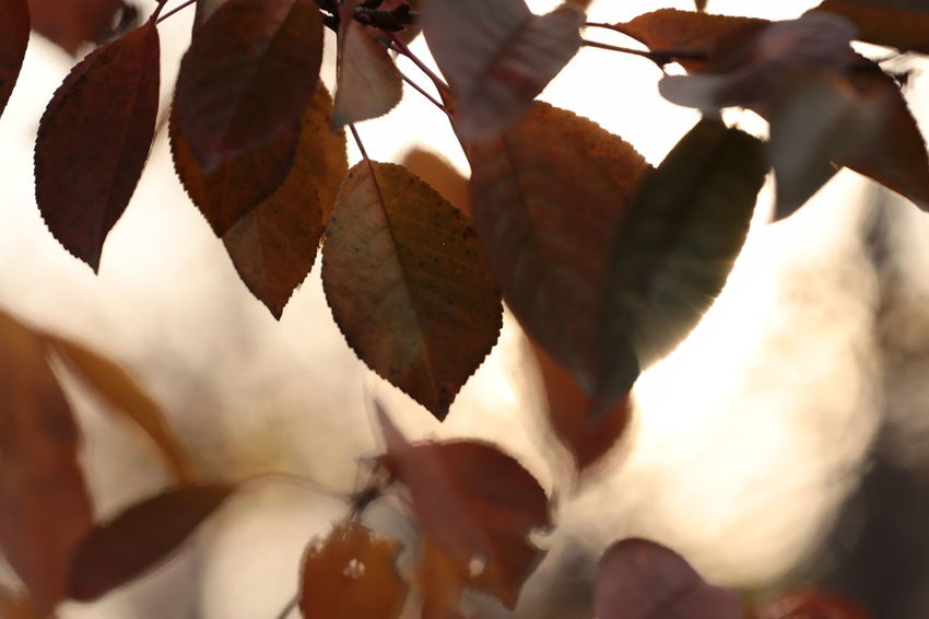 Leaf No People Autumn Close-up Outdoors Nature Beauty In Nature Plant The Week On EyeEm Fragility