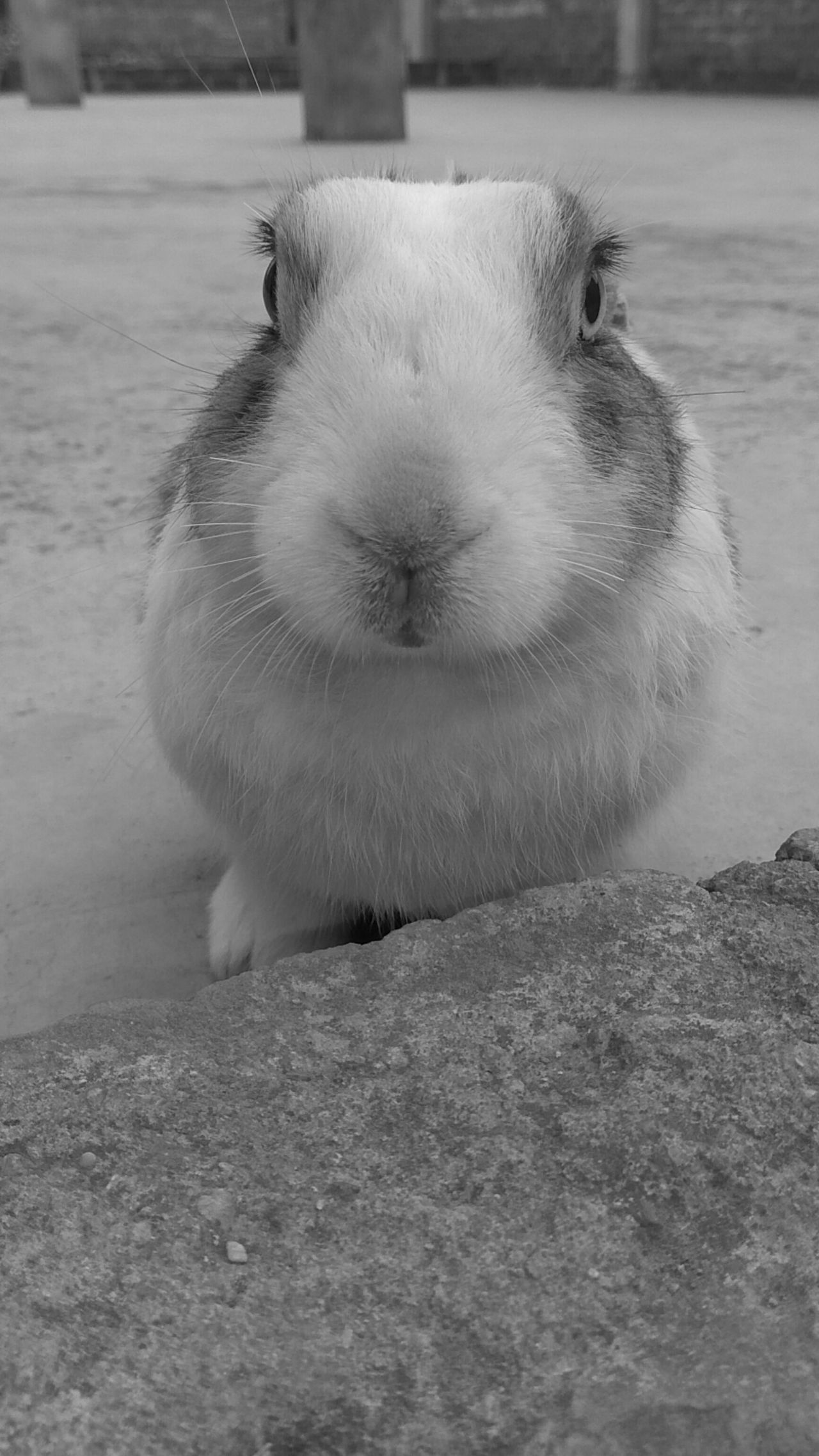 Animal Themes One Animal Domestic Animals Close-up Outdoors Nature Rabbit Pet Photo Love Good No People Day Animals In The Wild Mammal Bird