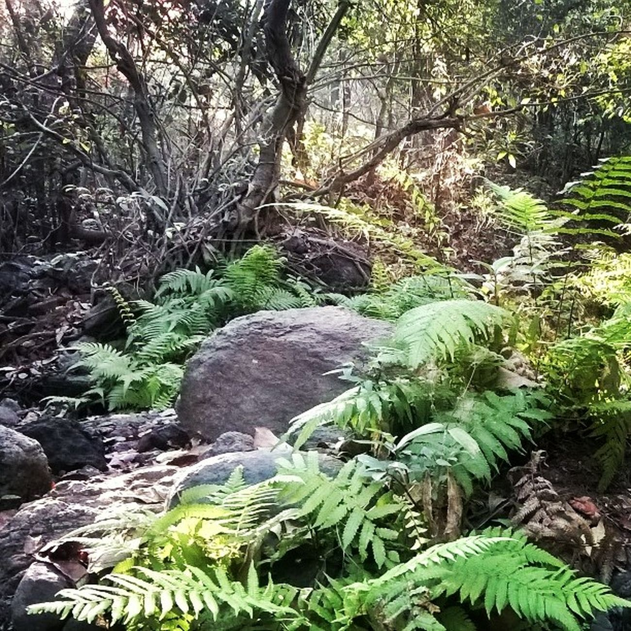 Jungle JurasicPark Stoneage Refreshing Treck Cousins  Fun💕