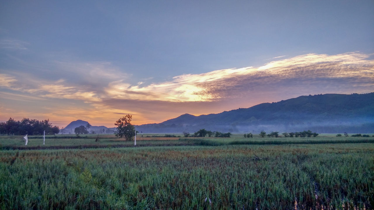 Agriculture Beauty In Nature Cloud - Sky Day EyeEm Best Shots EyeEmNewHere Full Length Grass Landscape Mountain Nature No People Outdoors Paddy Field Scenics Sky Sunrise Tranquil Scene Tranquility Tree