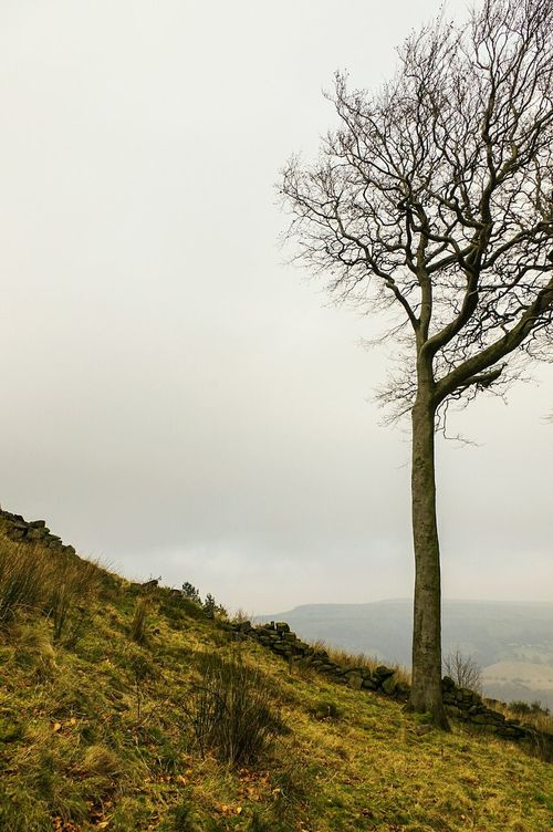 Tree Nature Landscape Fog Outdoors No People Branch Tranquility Beauty In Nature Scenics Sky Day Single Tree Calderdale Atmospheric Foggy Tranquil Scene Beauty In Nature Tree Treescollection Moors Moorland Mytholmroyd Daisy Bank Field Miles Away