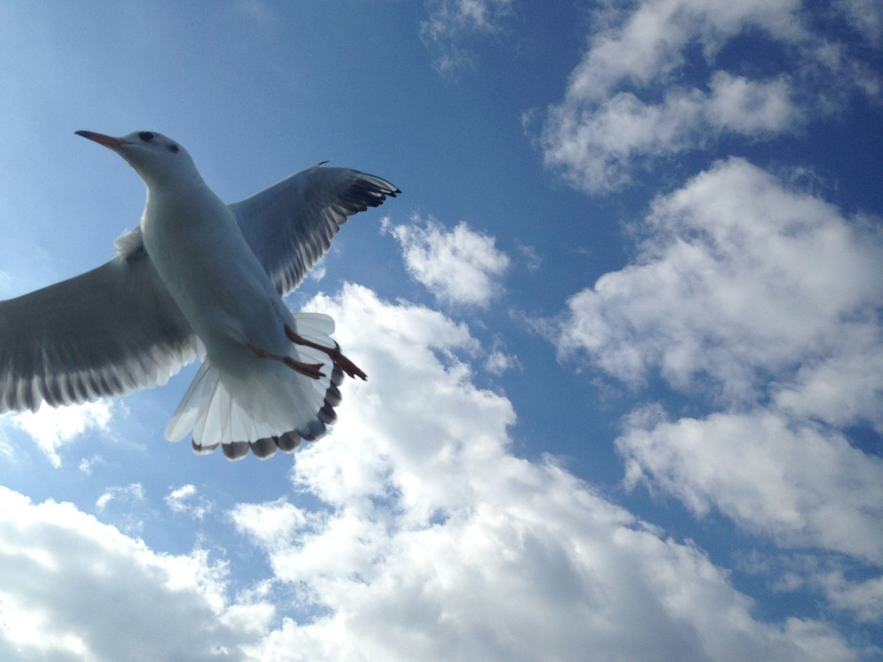 On a ferryboat toword to Kumamoto city. Alone Ferryboat Flap Freedom Lonely My Pace Ocean Sea Gull Sky