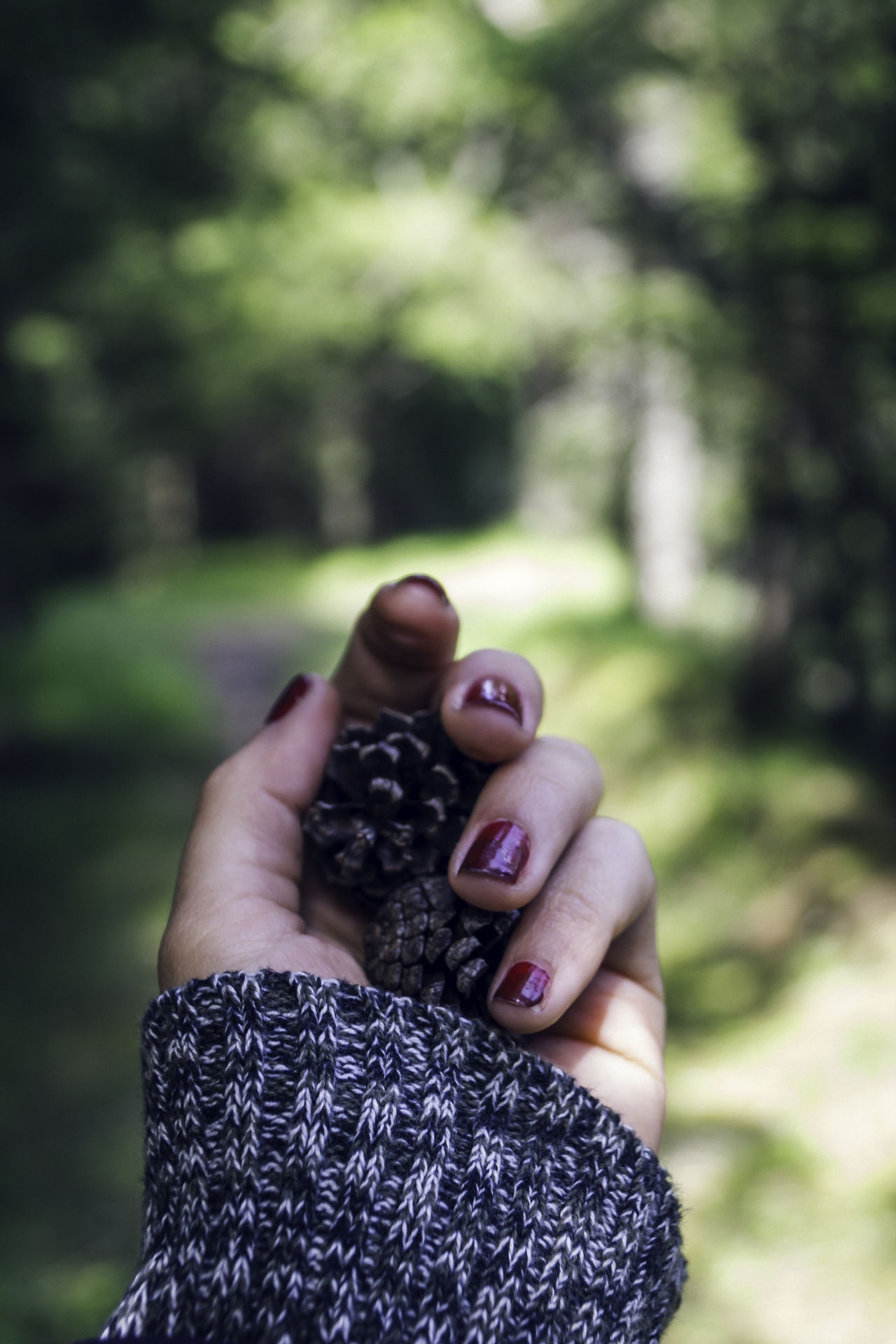 Hiking in Switzerland Autumn Bokeh Close-up Cozy Creativity Cute Day Detail Focus On Foreground Forest Green Grey Hand Hiking Holding Leisure Activity Nails Person Personal Perspective Pine Spring Sweater Sweet Vertical Woods