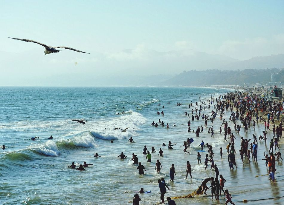 Beautiful stock photos of community, Auto Post Production Filter, Beach, Bird, Cloud