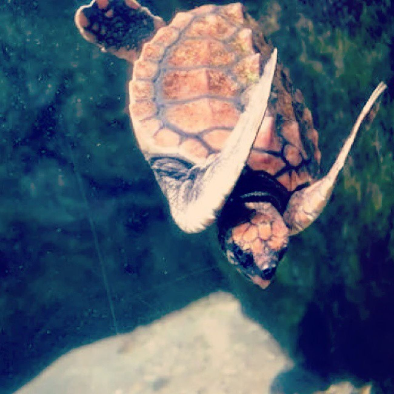Missing Port Elizabeth. ♥ Portelizabeth Southafrica Happytimes Beach Ocean Sea Clouds Memorablemoments April 2014 Thingsilove Thingsimiss ♥♥♥ Oceanerium Turtles Seacreatures Animals Oceanlove