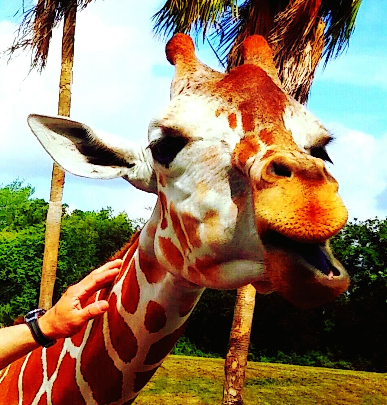Close-up Giraffe♥ Dont Touch Me Goofy Face Taking Pictures Photo Op Animal Model Safari Animals Safari No People