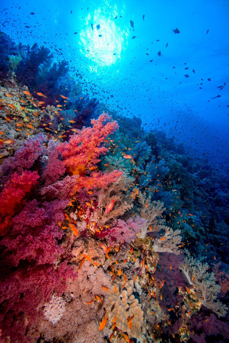 red sea Adventure Animals In The Wild Aquatic Sport Beatiful Nature Coral Escape Explorer Extreme Adventures Fish Large Group Of Animals Light And Shadow Multi Colored Nature No People Ocean RedSea Reef Scubadiving Sea Sea Life Solo Traveller Travel Photography UnderSea Underwater Unusual Beauty