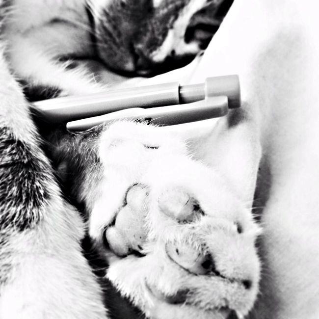 Mon Maxou Noir&blanc