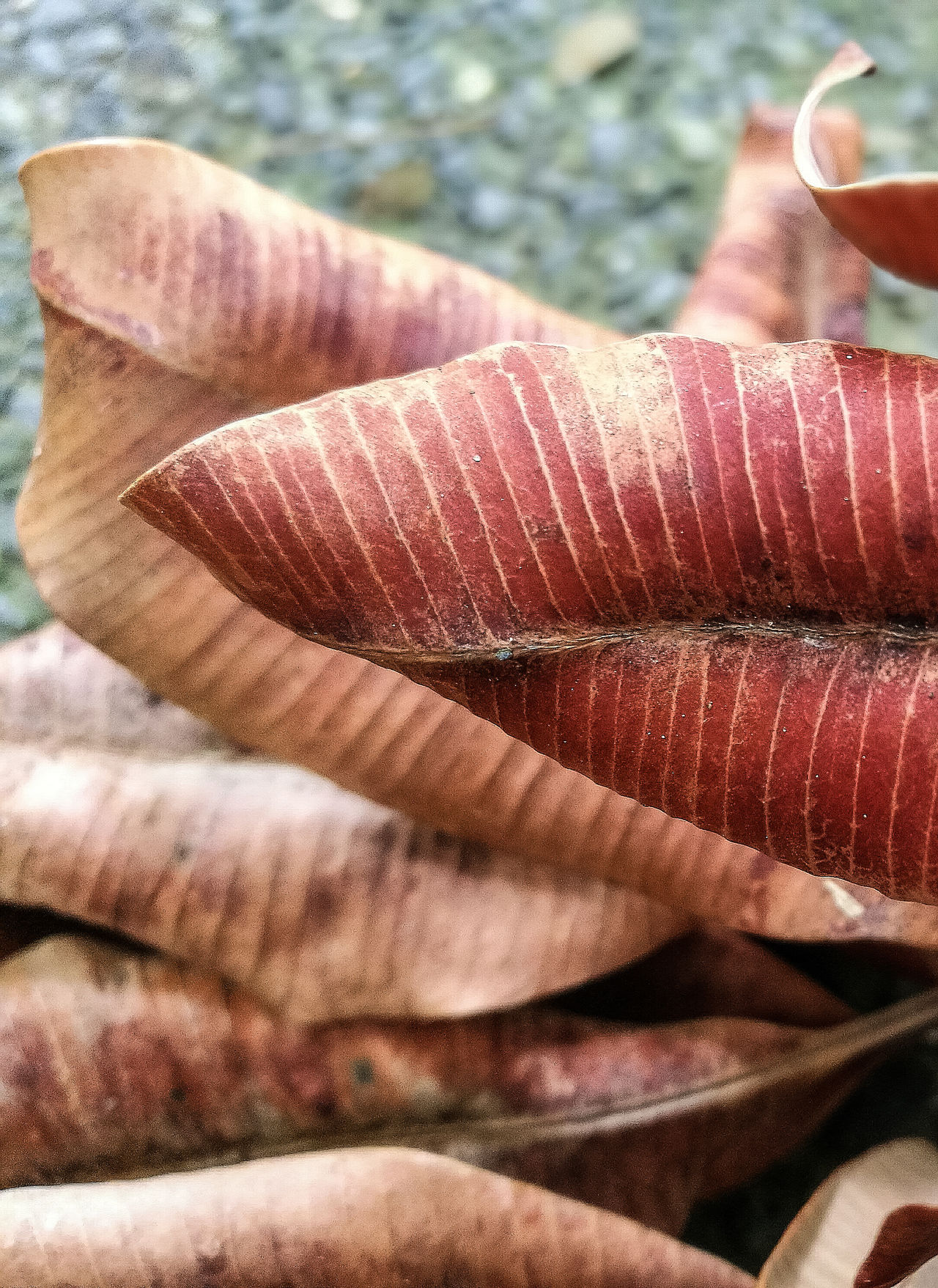 Focus Object Leaves On The Ground Leaves Dead Leaf Deadcrap Leaf Nature Curves And Lines Vertical Symmetry Horizontal Symmetry Lines Pattern Geometric Shape Horizontal No People Focus On Foreground Depth Of Field Backgrounds Curves Brownish Close-up Nature Photography