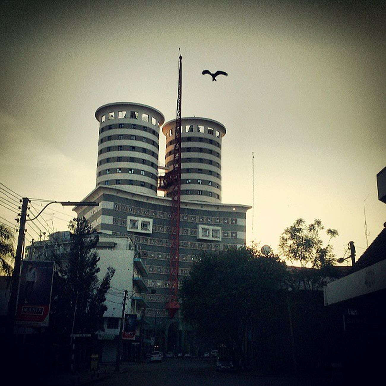 Goodmorning NationMediaHouse Sunrise Nairobi kenya bird webstagram statigram photography