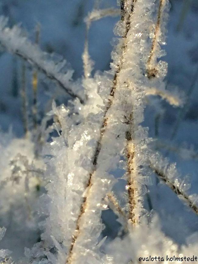 Snowcristals  EyeEm Nature Lover Frosty Landscape
