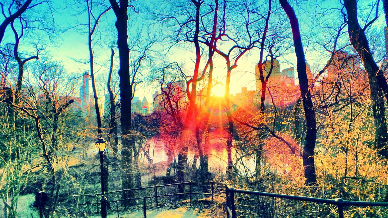 central park. NYC Central Park - NYC Sunrays New York